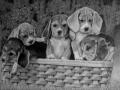 cuccioli_NEW