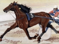 Cavallo5