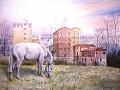 Cavallo bianco ai Mulini -Nalon